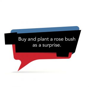 Buy and plant a rose bush as a surprise